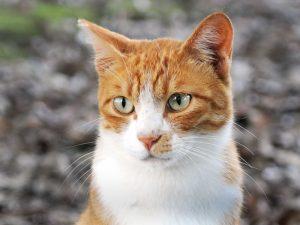 Onoranze funebri per gatti Milano