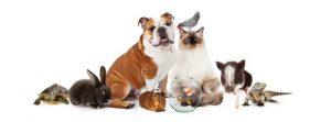 Agenzia funebre per animali domestici Milano