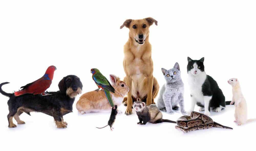 animali-esotici