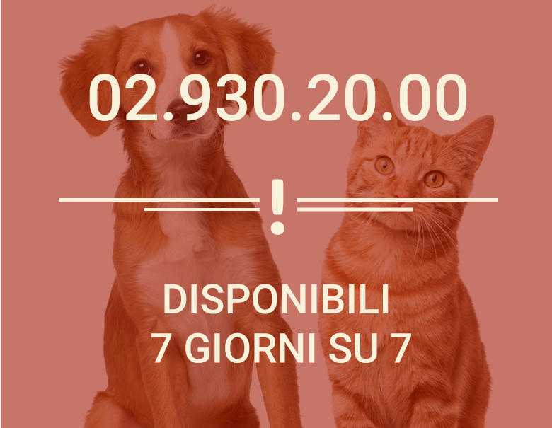 chiamata-1